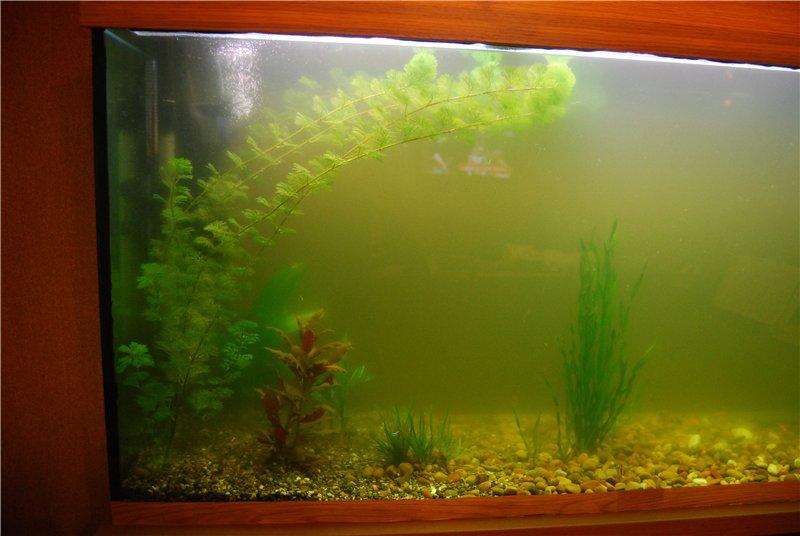 аквариуме картинки вода в